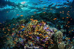 A reef of beauty. by Tony Neal