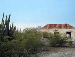 Cactus is everywhere in Curacao...very dry land not lush ... by Kelly N. Saunders