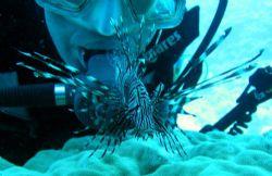 lion fish & diver by Milan Zurkovic