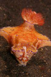Shrimp & Nudi Sulawesi 2005 by Brad Cox