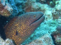 Moray taken at Sharksbay, Sharm el Sheikh with Olympus C60. by Nikki Van Veelen