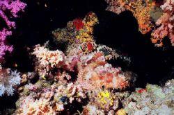 Scorpion Fish Camouflage! Shark Reef, Ras Mohamed Park, ... by Erich Reboucas