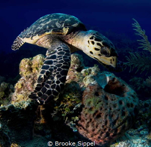 Lunch date with a turtle by Brooke Sippel