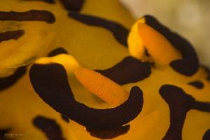 Close up of a Pikachu by Pepe Suarez
