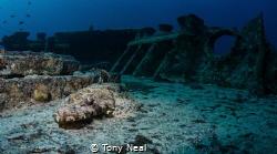Thisser croc fish by Tony Neal