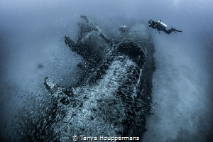 'Capturing History' - An underwater photographer lines up... by Tanya Houppermans