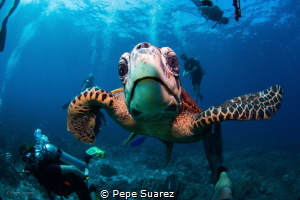 This turtle liked what she saw on the reflection of the d... by Pepe Suarez