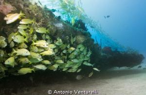 shallow reef life,Playa del Carmen by Antonio Venturelli