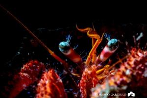Eyes of Little pagurian, Micro Nikkor 40 mm + Nikon D7200... by Marco Gargiulo