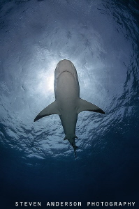 Sharks and the sky make me dream!!!!! by Steven Anderson