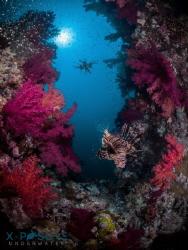 Location: Red Sea Olympus OMD-EM5,  Nauticam Housing  ... by Christian Llewellyn