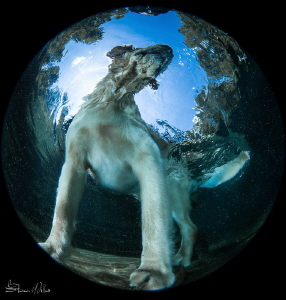 Where is your ball?? by Steven Miller