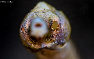 Who? Me? I'm a Pipefish by Tony Cherbas