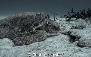 Resting in the sand. by Chris Miskavitch