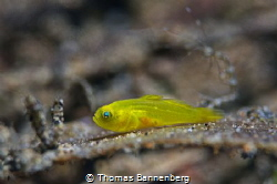 baby fish Settings: f11, 1/60, ISO 100, wet diopter (+2 ... by Thomas Bannenberg