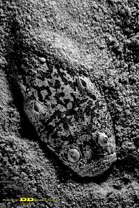 Live sand - Cebu -Philippines by Marco Faimali (ismar-Cnr)