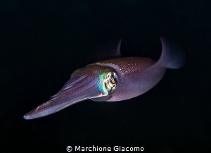 Squid