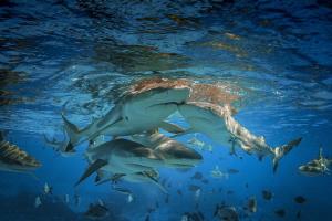 Sharky dance by Doris Vierkötter
