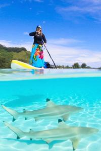 Paddleboard sharks by Doris Vierkötter