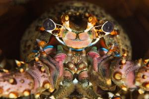 cray fish by Pepe Suarez