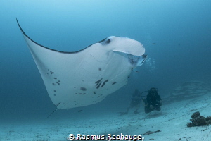 Manta on a cleaning station by Rasmus Raahauge