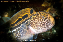 Sometimes the change from young to old in a fish is drast... by Marc Damant