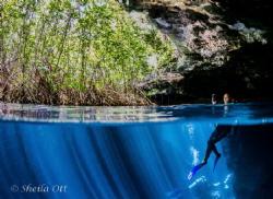 'Pensive Reflection' Cenote Split frame in the Jardin del... by Sheila Ott