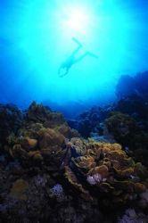 Ras Nasrani Reef, Sharm El Sheikh, Egypt. by Erich Reboucas