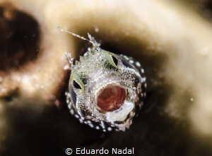 open big!!!!!!! by Eduardo Nadal
