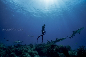 Free diver and sharks by Michael Dornellas