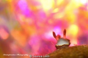 Magic Moment  by Louisa Lam