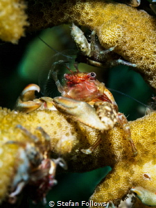 Chillaxin
