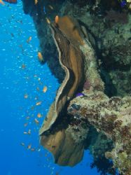 Nice coral taken at the The Quays dive site in Ras Mohame... by Nikki Van Veelen