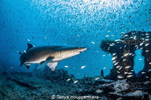 'In The Storm' - Not rain, but fish! Thousands of tiny ba... by Tanya Houppermans