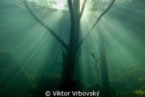 Underwater wood by Viktor Vrbovský