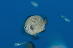 B L U R