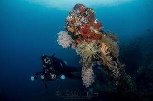 B L U E USAT Liberty Wreck Tulamben, Indonesia. March 2016 by Irwin Ang