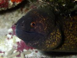 Moray Eel in Tumon Bay, Guam by Jason Rootes