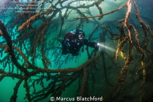 Diver in submerged trees by Marcus Blatchford