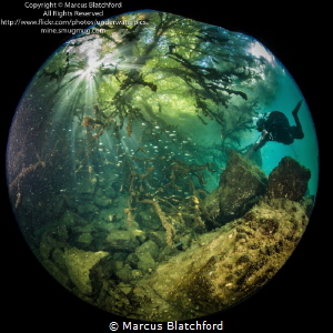 Diver and fish under tree by Marcus Blatchford