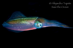 Squid in Black, Veracruz Mexico by Alejandro Topete