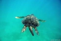 Big turtle! by Glenn Verheyde