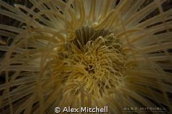 Glowing tube worm by Alex Mitchell