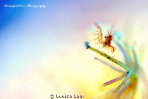 Live Life in Colours by Louisa Lam
