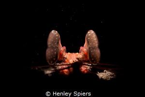 Lisa's Mantis Shrimp by Henley Spiers