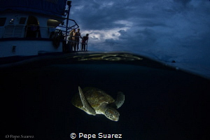 All day waiting for a turtle and she decided to visit our... by Pepe Suarez