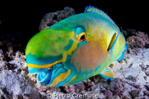 SMILE! A playful parrotfish seem to smile at my dome by Pietro Cremone