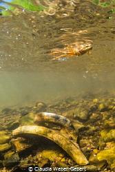 freshwater - rare encounter by Claudia Weber-Gebert