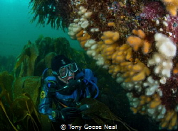 Diver looking at dead mans fingers by Tony Goose Neal
