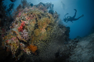 Mr.A (Randi Ang) in action Bounty Wreck (Gili), Indonesi... by Irwin Ang